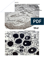LP 8 - Histologie Si Embriologie Animala - Imagini LP 8