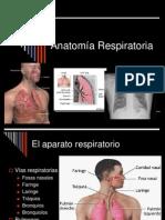 Anatomia respiratorio