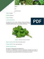 HORTALIZA .pdf