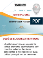 02. NEUROANATOMÍA