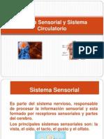 Sistema Sensorial y Sistema Circulatorio.ppt