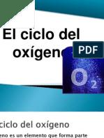 El ciclo del oxigeno