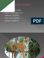 felinas diapositiva