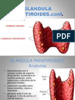 GLANDULA PARATIROIDES