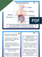 Digestion Absorcion