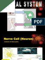 The Nerve System 1