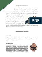 LA EVOLUCIÓN DE LOS PRIMATES.docx