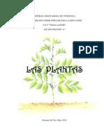 Las Plantas- Kelly