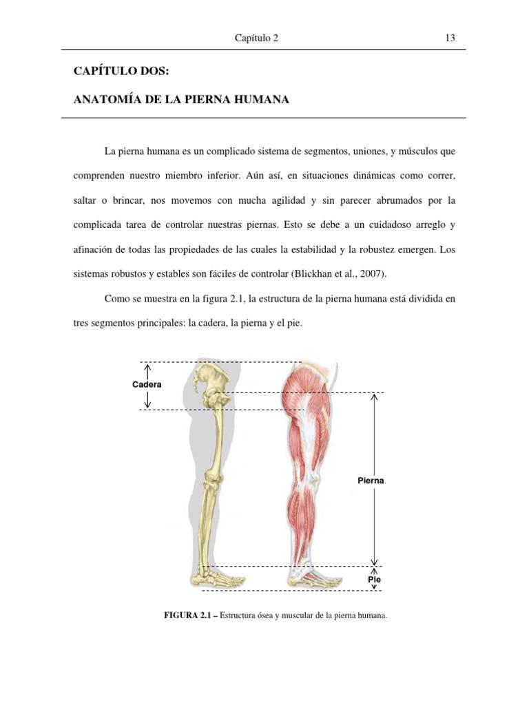 Excelente Diagrama De La Anatomía Muscular De La Cadera Galería ...