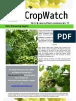 Adelaide Hills Crop Watch 131109