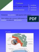 Embriologia 4
