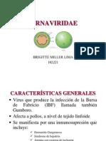 BIRNAVIRIDAE 2
