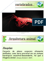 Zoologia Bauplan2