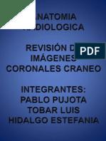 Anatomia Grupo 4