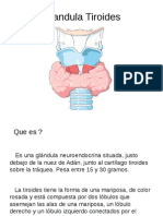 Glandula Tiroides