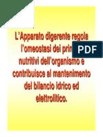 Sistema Gastrointestinale Fisiologia Del