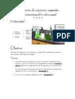 Cromatografía de Papel,Espinacas