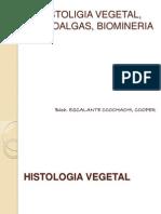 Histoligia Vegetal, Microalgas, Biomineria