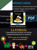 Clase 7 Metabolismo Celular