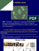 Celule.stem