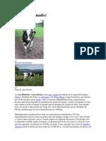 Holstein.docx