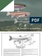 A Trouts Anatomy-web