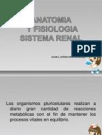 Anatomia y Fisiologia Sistema Renal