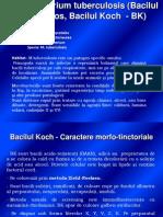 Curs 5 Bacteriologie - BK, B. Difteric Refacut