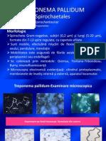 Curs 7 - Treponema Pallidum Refacut