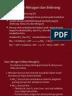Asimilasi Nitrogen Dan Belerang
