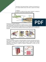 Tipos de  Respiración.pdf