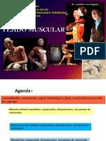 tejidomuscularale2013-131028110901-phpapp02