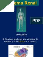 sistemarenal-090912173150-phpapp02