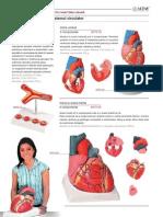 Anatomie-Biologie