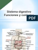 Sistema Digestivo Final 5D