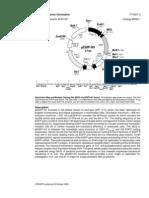 PEGFP-N1 Vector Information