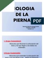 Miologia pierna final.ppt [Modo de compatibilidad].pdf