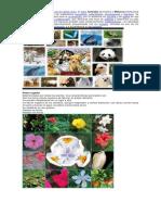 Reino Animal Vegetal Fungi Protista Monera