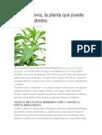 Cultivar Stevia 3