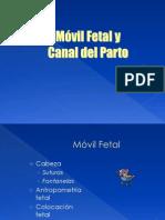 Movil Fetal II