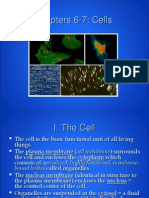 ap - cells