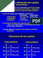 Abs Orc i on Digestion Lipid i CA