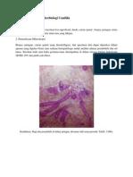 LO 2 Pemeriksaan Mikrobiologi Candida