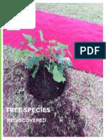 Tree Re Discoverd - Dar Es Salaam