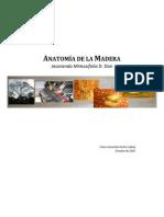 2007_Jacaranda Mimosifolia Anatomia de La Madera