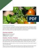 Tomatoes Gardening