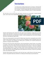Peaches and Nectarines Gardening