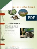Control Biologico en Nopal