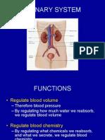 11 Urinary System