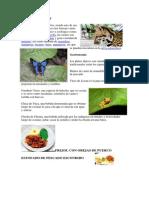 Flora y Fauna NAPO